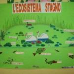 Ecosistema stagno